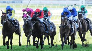 NSW Horse Race