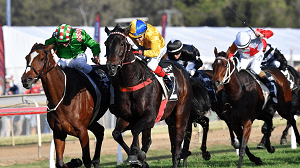 Horse Races in Queensland